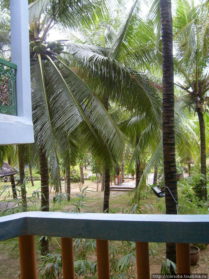 Вот такой кокосовый рай!