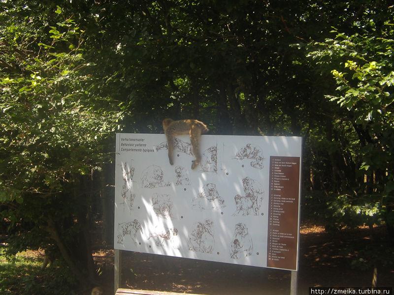Стенд с описанием поведения обезьян