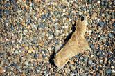 А по всему пляжу разбросаны вразнобой кусочки разноцветных щетинистых шкурок…