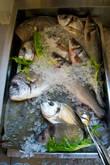 Четверг — рыбный день!..
