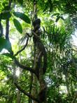 Джунгли Амазонки снизу — зрелище не сильно впечатляющее. Основная жизнь происходит наверху, метрах в тридцати от земли. Свет проникает сюда довольно скупо и растительность довольно неинтересная