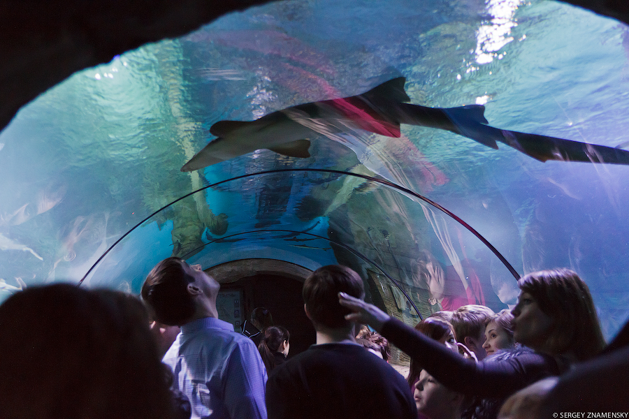 Я был очень рад туннелю под водой. Все как в крупнейших океанариумах мира: