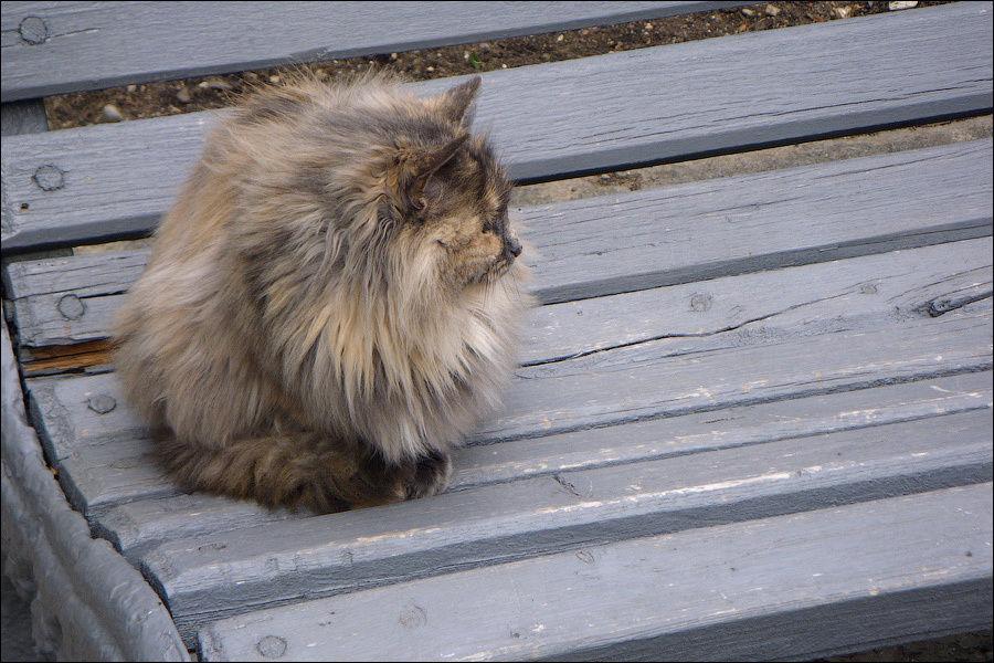 Алупка. Парк Воронцовского дворца. 7 января 2009 г.