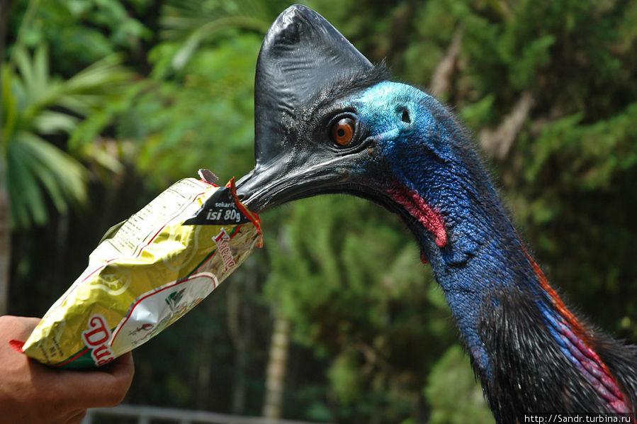 Остров Биак: парк птиц Остров Биак, Индонезия
