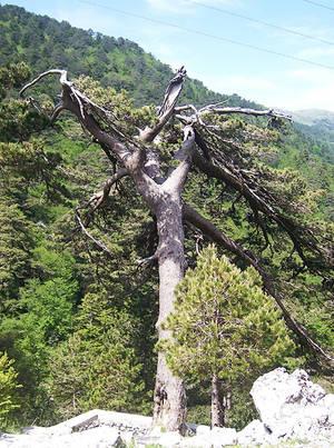 Дерево под названием