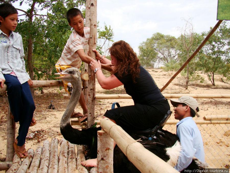 Слезть со страуса помогают эти ребята