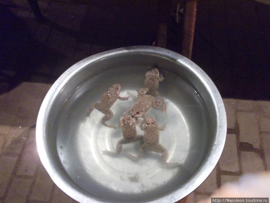 мое любимое лакомство. При нужде кушаю их даже сырыми, но больше люблю наваристый супец из них или лягушек в тесте..м-м-м — пальчики оближешь