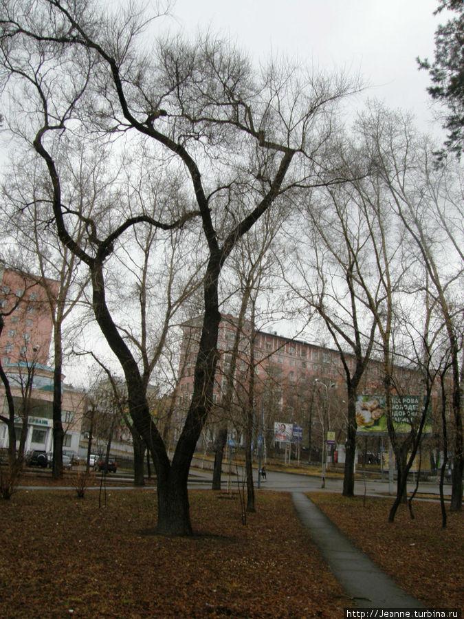 Уссурийский Бульвар... Такие кружевные деревья...