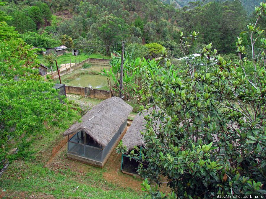 Территория зоопарка. В крытые павильоны мы не заходили. Видно крокодиловый пруд и напротив него хамелеонник