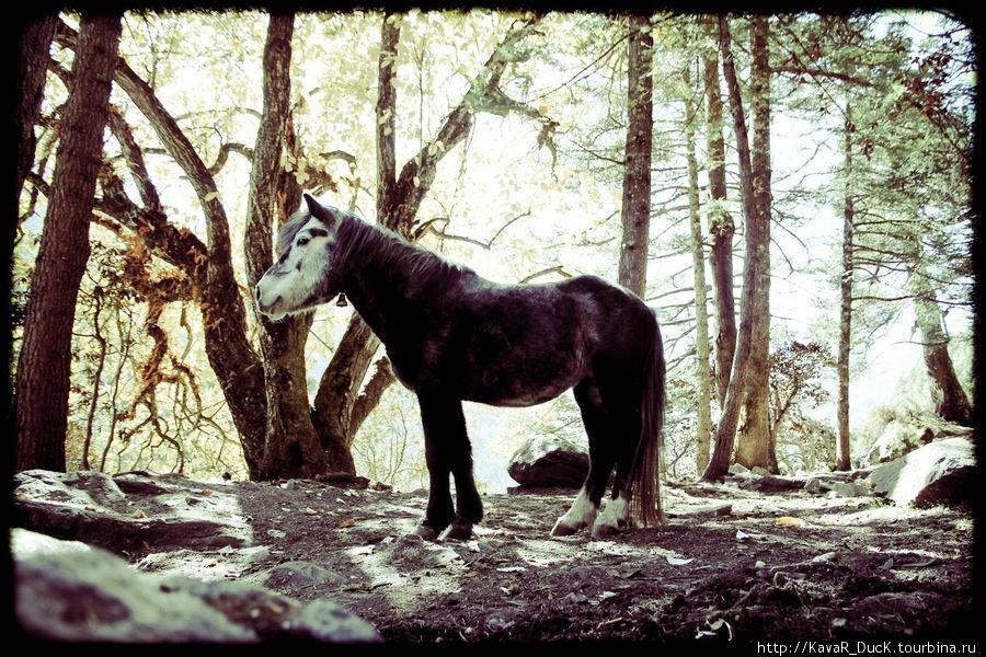 pony в лесу