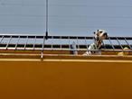 Эта собака была судя по всему заперта на балконе и терпеливо ждала своих хозяев, глядя глубокими темными глазами на пустынную улицу