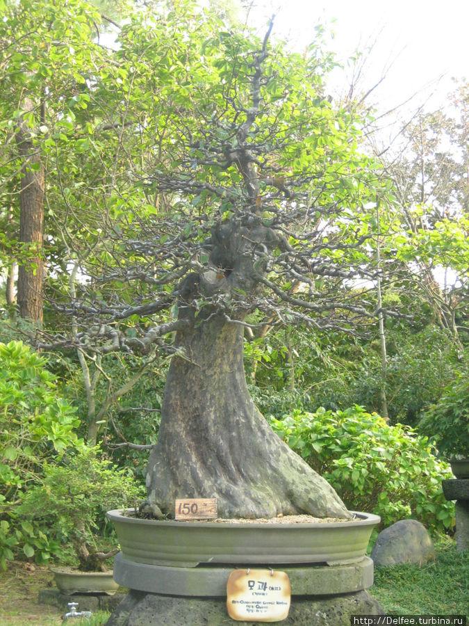 Дереву 150 лет