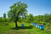 У хозяев ульи, мед будет разноцветье