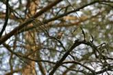 телевик может достать далеких певчих птиц, но это очень и очень непросто из-за нагромождения веток