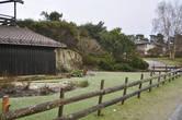 Сады на скалах и зелень в начале января