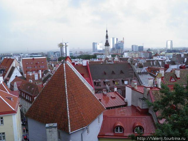 Крыши Старого Таллинна