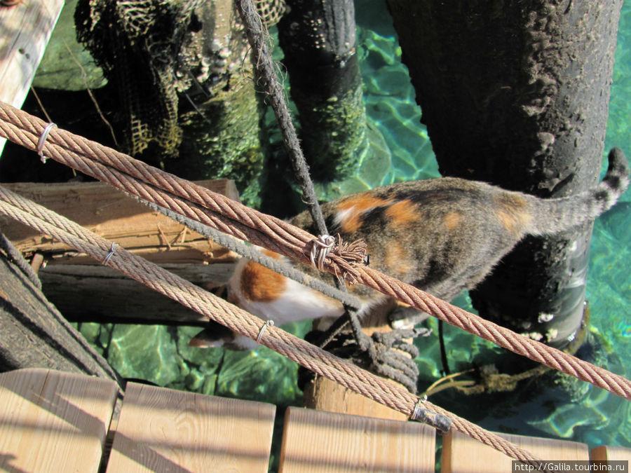 Кошка на дельфиньем рифе.