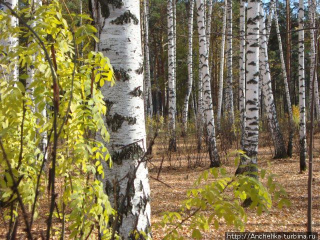 Природный парк  в Северске. Северск, Россия