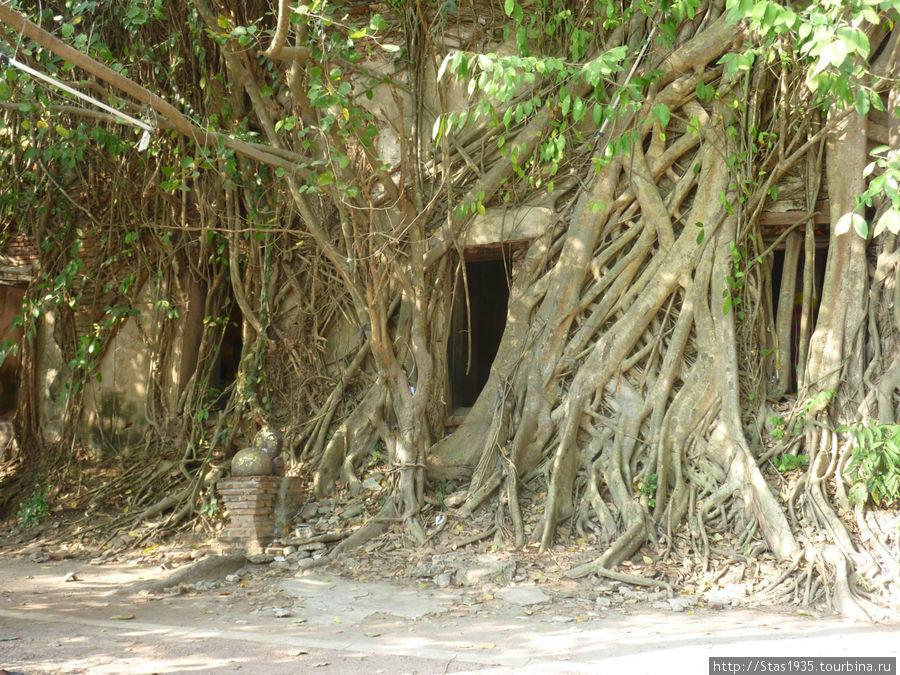Таинственная часовня в корнях гигантского дерева Баньян.