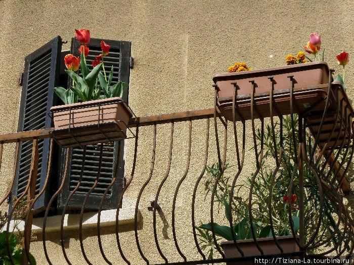 Вы часто видели тюльпаны в балконном горшке? Я единственный раз и поэтому сняла