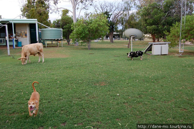 На полицейском участке: корова, пёс и поросёнок