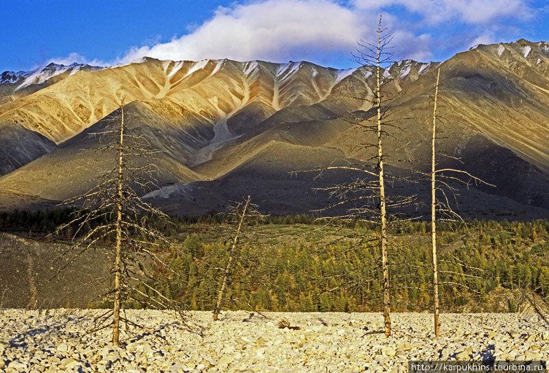 Умершие деревья в долине Ниткана.