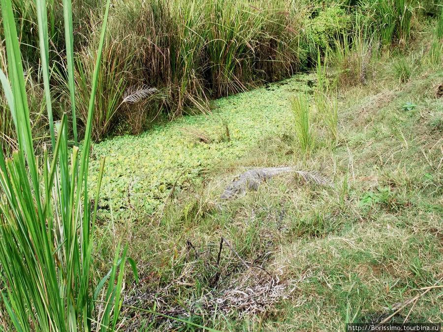 Обычное с виду болото, но что-то здесь явно не так...