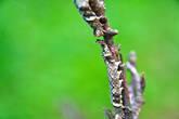что еще: на обратном пути меня заинтересовала вот эта гусеница, на которую я бы даже не обратил внимание если бы не знакомый с биологическим образованием и более наметанным глазом...