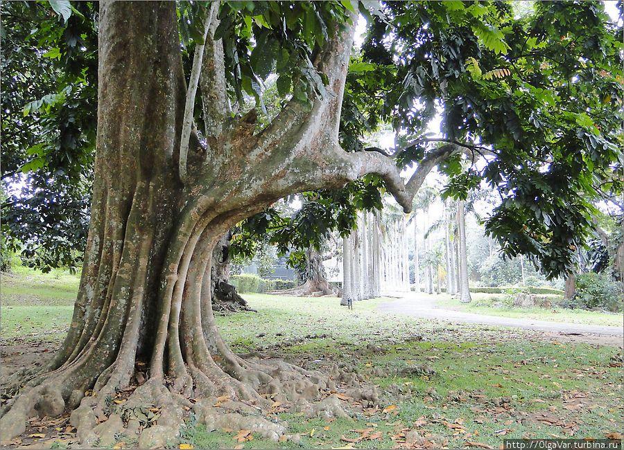 Возвращение в Эдем Перадения, Шри-Ланка