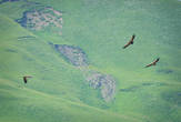 И если бы только природа приподносила сюрпризы — было бы еще полбеды! Но нас, как назло, поджидал целый зоопарк! Огромные птицы, взмывающие в небо, испугавшись рева мотора (чуть позже, нагуглившись от души, мы заподозрили в них белоголовых сипов)..