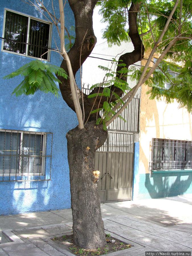 Дерево, выглядит весьма забавно с его  оголенными ветками, увенчаными листвой, но это не дерево.