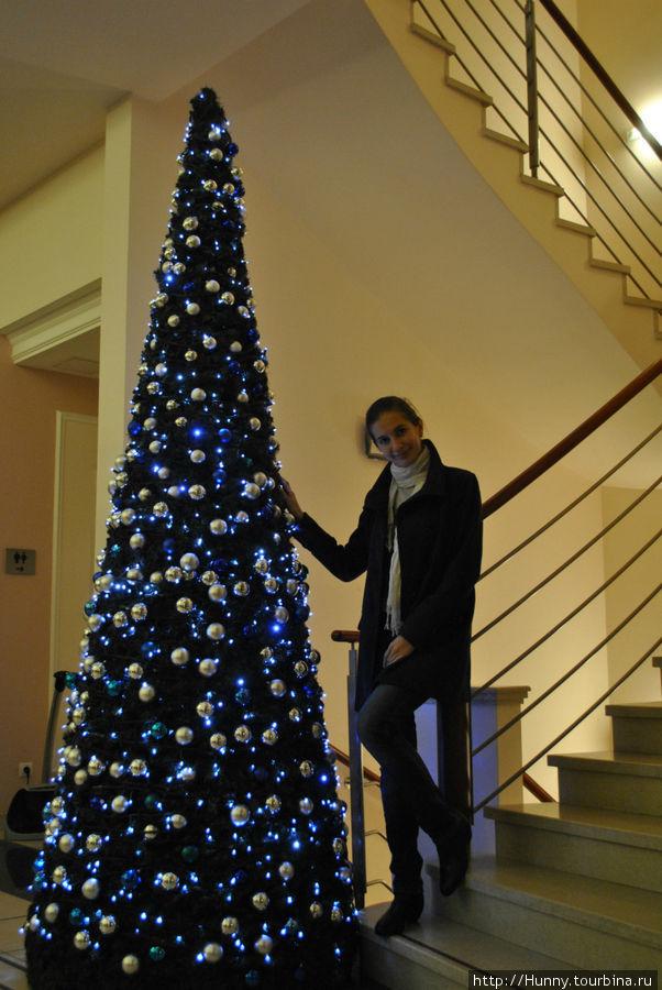 25 ноябре в холле уже появилась елка