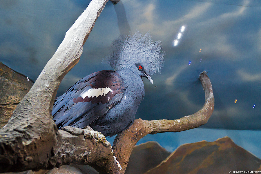 Птица, напомнившая мне завуча в школе: