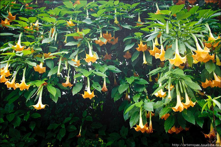 Повсюду растут овощи и фрукты, каждый садик и забор украшен цветами.