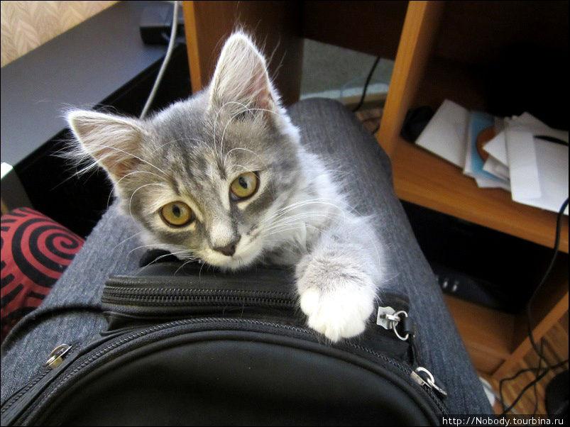 Мой милый помощник в нелёгком деле отдыха=)))