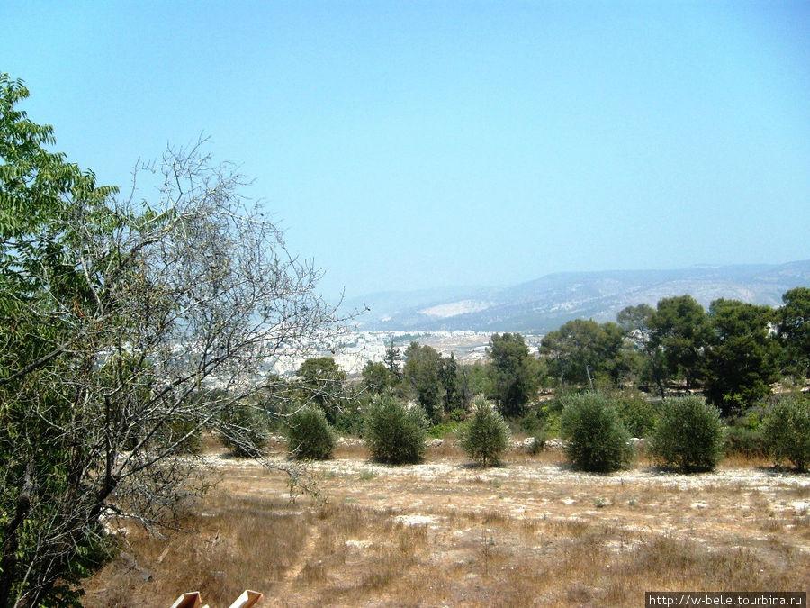 Оливковые сады около монастыря.