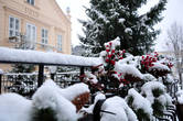 Глянешь вправо — еловые лапы гирлянд тяжелеют под снегом...