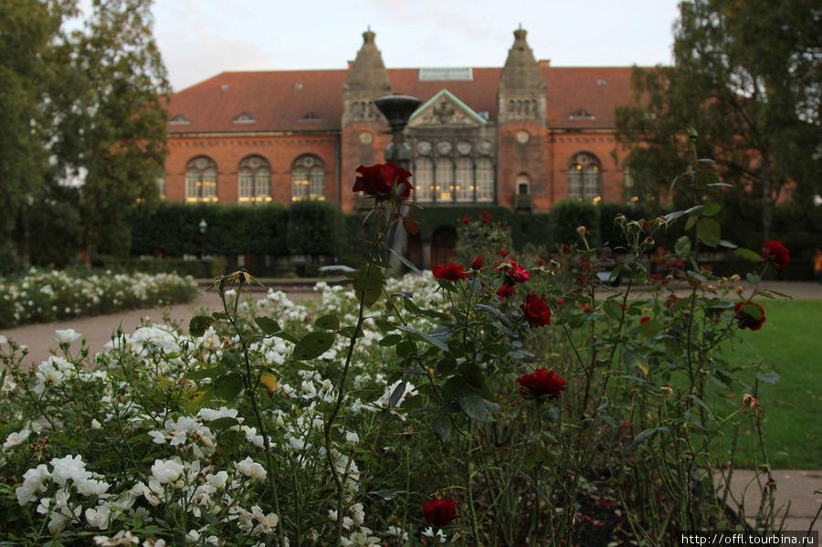 Розовые кусты у Королевской библиотеки