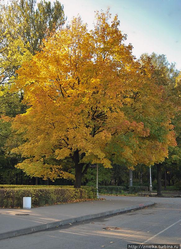 Осенью в парке очень красиво, он одет в золото и щедро посыпает им гуляющих под деревьями :)