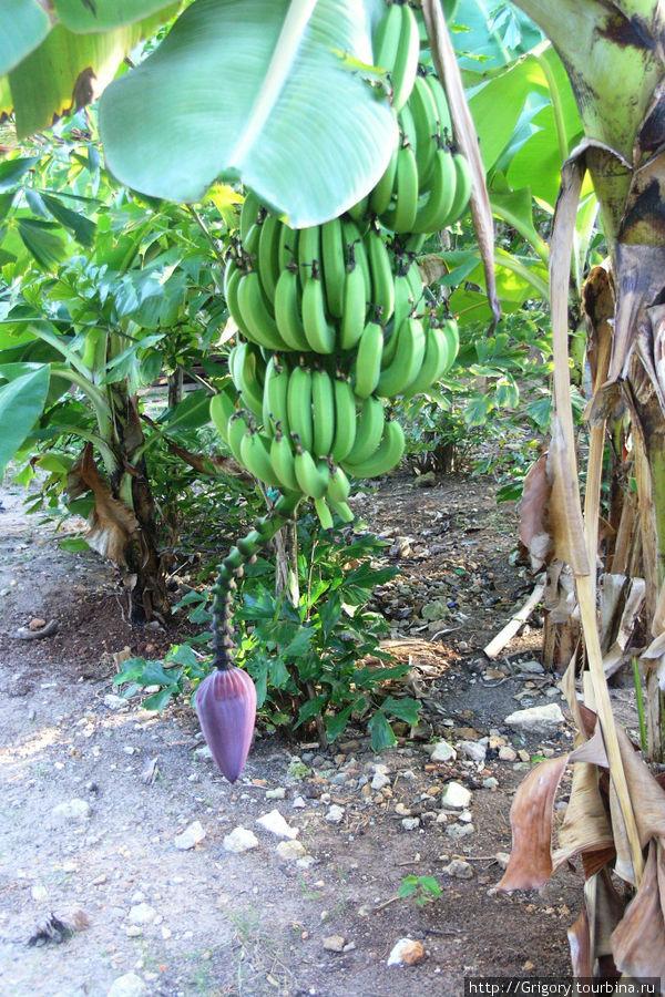 Бананов цвет
