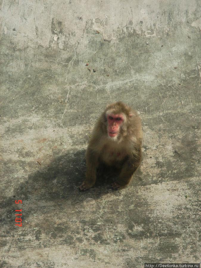 Эта маленькая обезьянка, судя по своему поведению, не всегда понимает что происходит