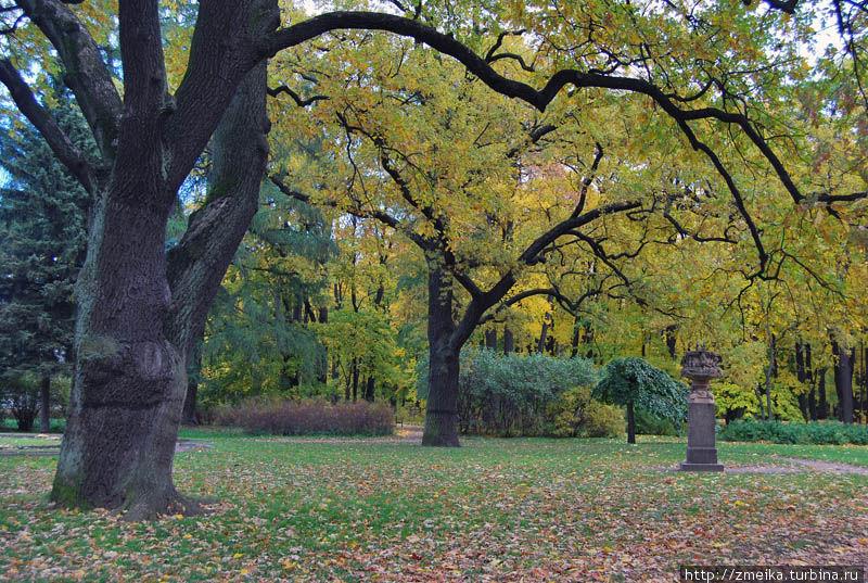 Ваза и дуб осенью