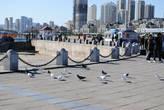 Птицы мира