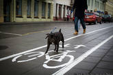 Почти весь центр оборудовали велодорожками, но самих велосипедистов не очень много. То ли еще не привыкли, то ли холод сказался.