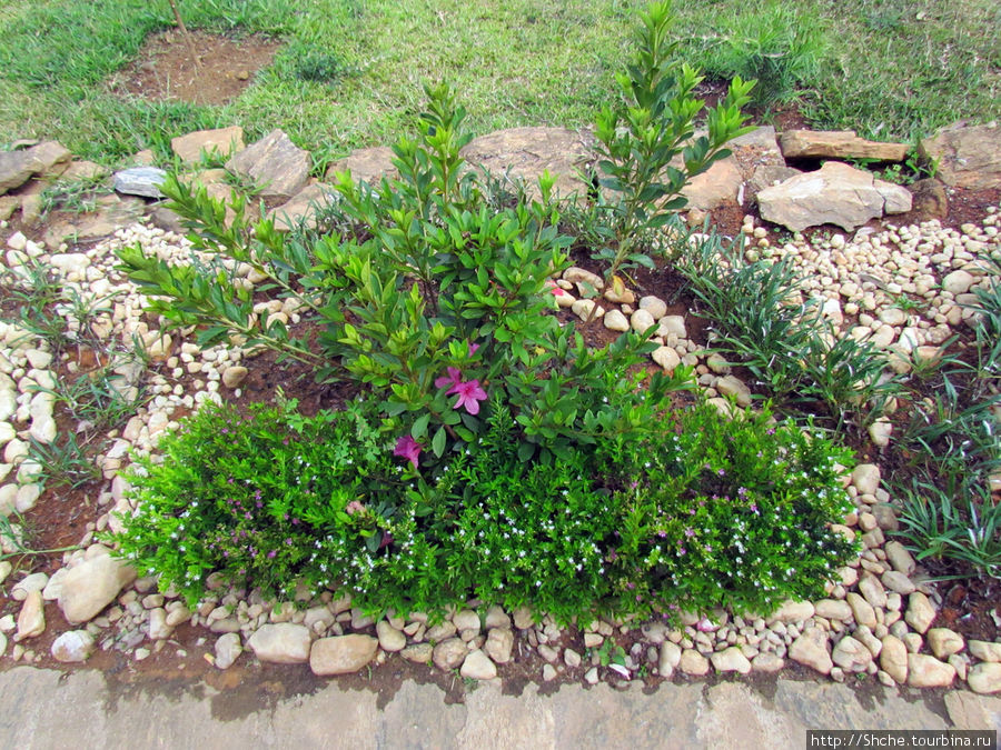 попытки садового дизайна
