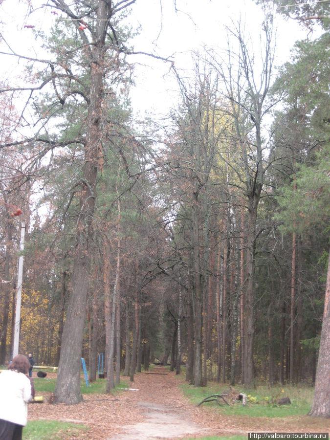 Главная аллея парка, единственная сохранившаяся из планировки Дашковой.