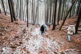 В таких местах волей-неволей задумываешься о вечном. Сколько людей за сотни лет прошли по этим тропам, а деревья все стоят и растут .