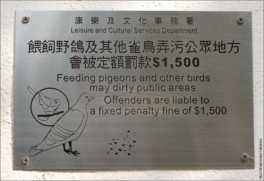 Штраф за кормление голубей 6000 р