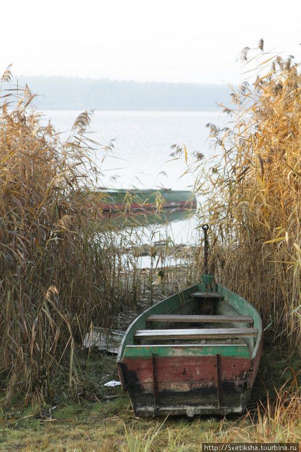 Раннее утро на берегу озера Томула Выру, Эстония