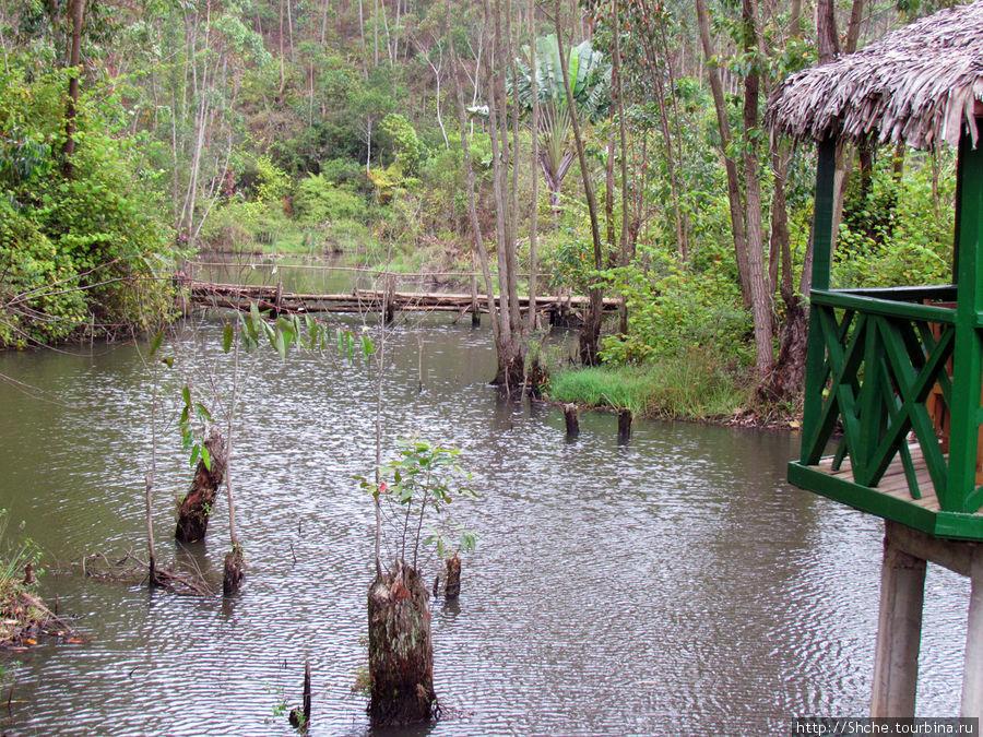 за тем деревянном мостиком начинается дикая природа